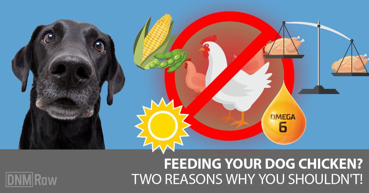 Chicken – conventional vs organic